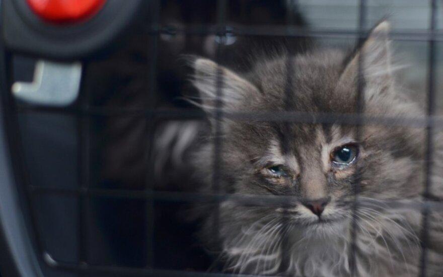 Kačiukas ieško namų