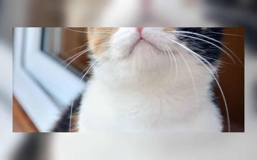 Dovanojama katė Margo
