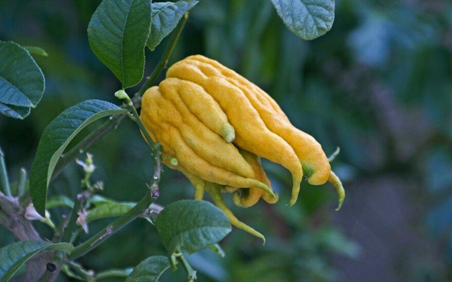Citronai