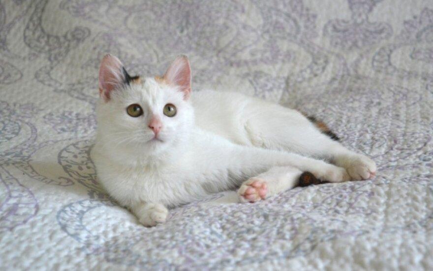 Katytė su riesta uodegyte laukia namų