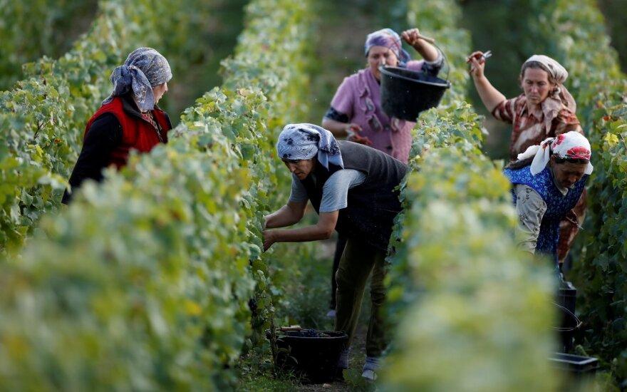 Europos vyndarių kova: sąlygos kinta, darbo jėga brangsta