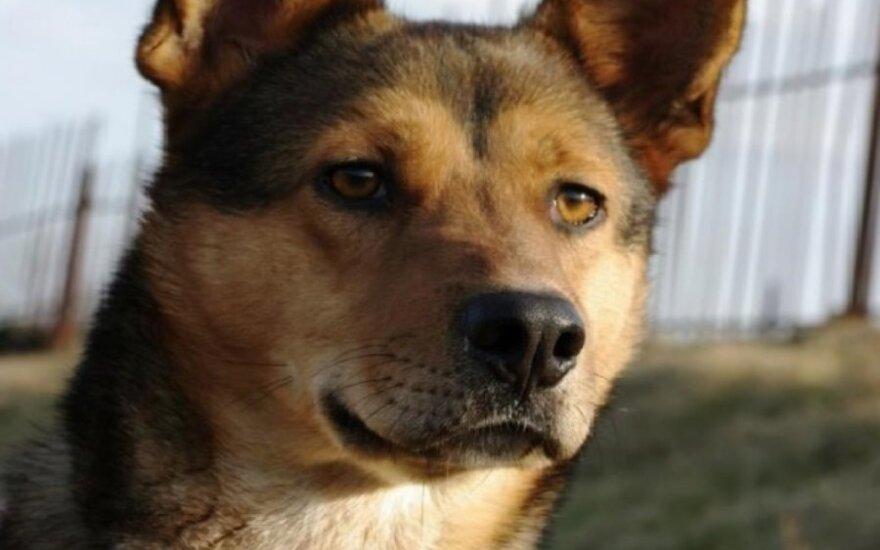 Pakalnutė - šuo sielai ir kūnui - ieško namų