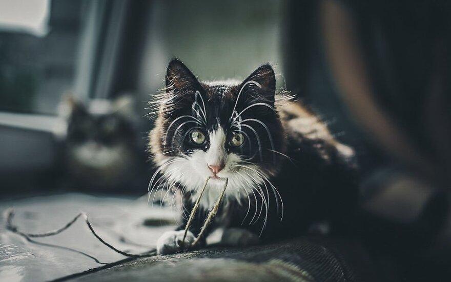 Katinas Bobas