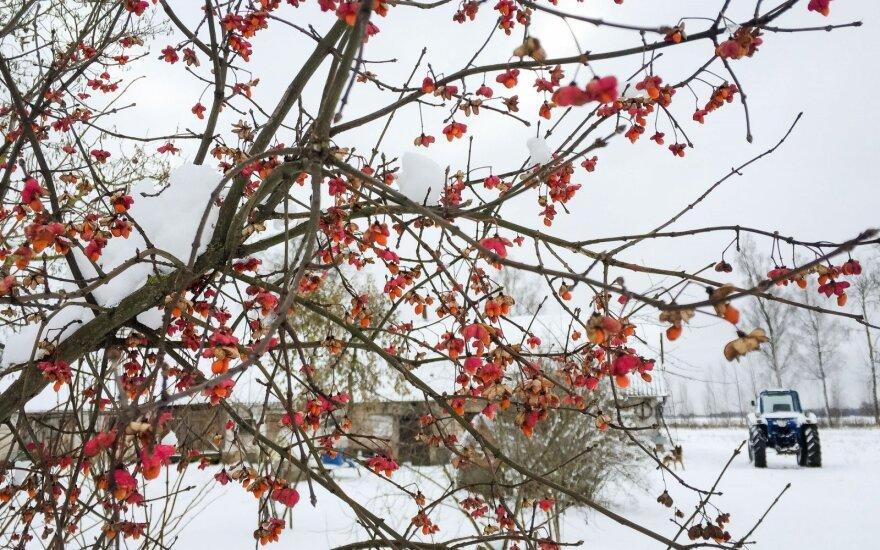Prognozuoja artėjančią žiemą