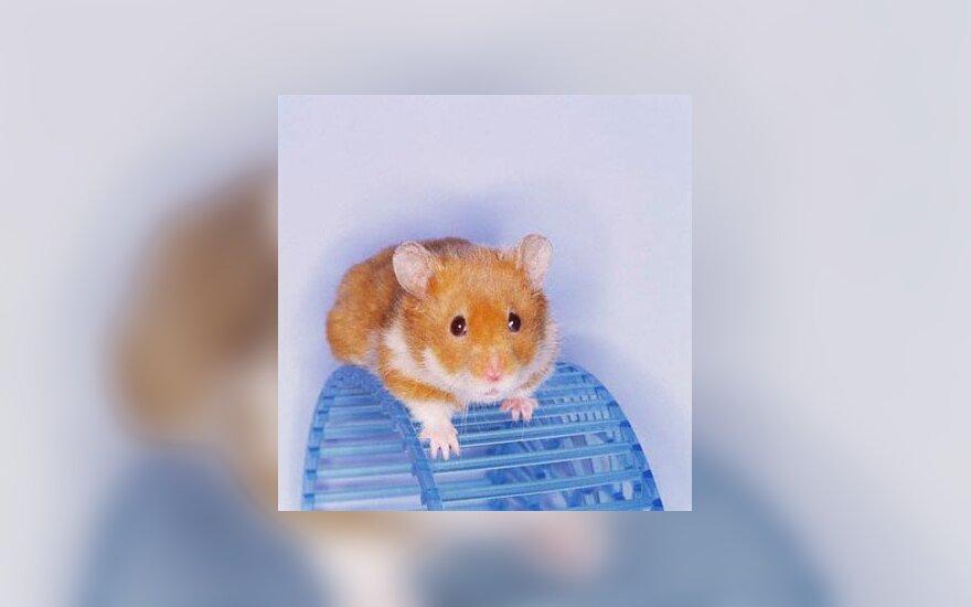 žiurkėnas