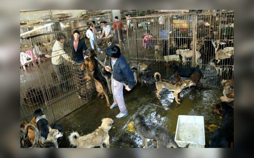 Šunų valgymo šventė