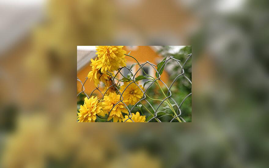 Kaimas, kaimo turizmas, gėlės, tvora, namas