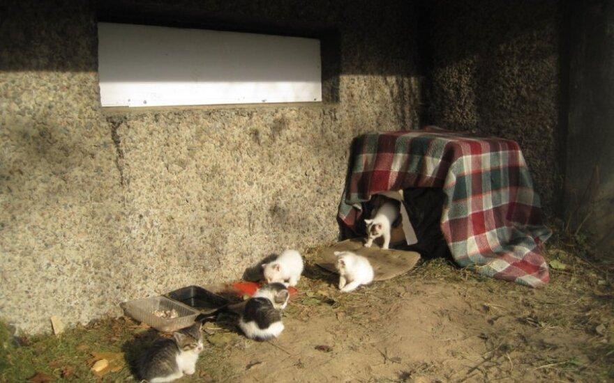 Septyni kačiukai - nykštukai gyvena dėžutėje ir laukia pagalbos!