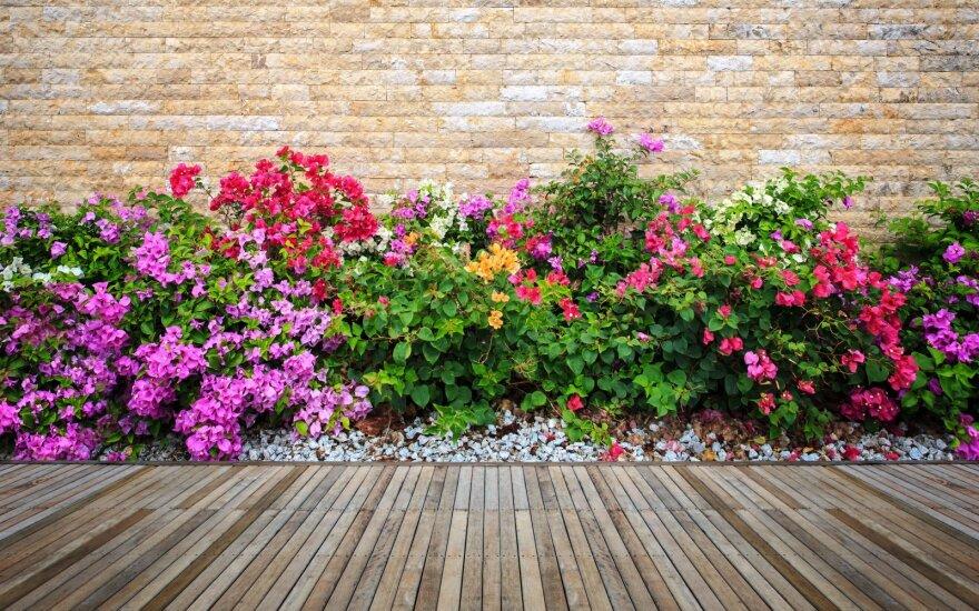 Prieš kimbant į pavasarinius darbus – botanikės patarimai, kaip planuoti gėlyną