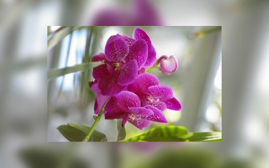 Augalų paroda
