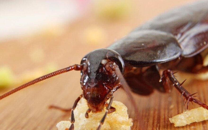 Į namus veržiasi vabzdžiai (asociatyvi nuotr.)