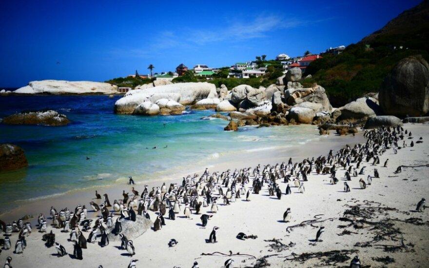 Pietų Afrikos Respublika. Ar verta važiuoti?