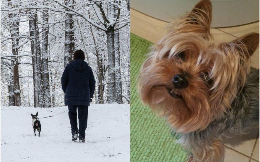 Savo augintinio iš šunų viešbučio vilniečiai nebeatgavo