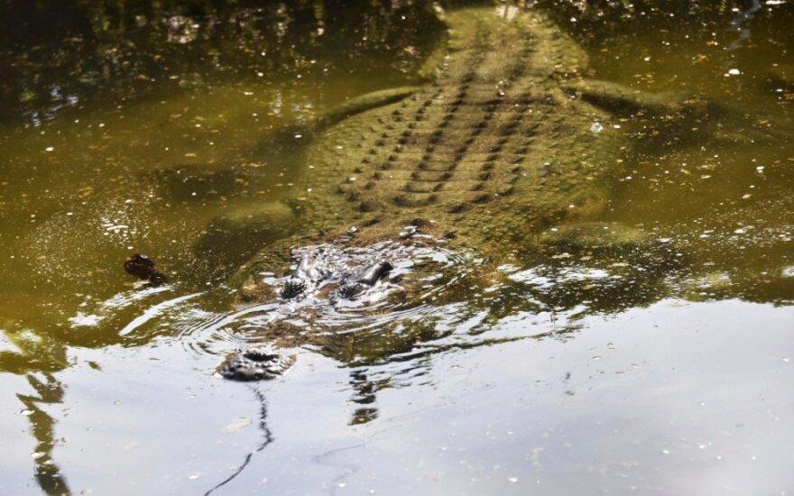 Krokodilas Australijoje