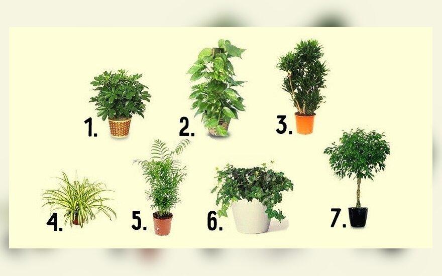Orą valantys augalai