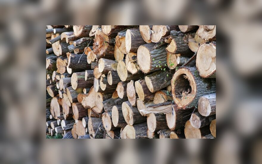 Kitąmet mediena brangs dešimtadaliu