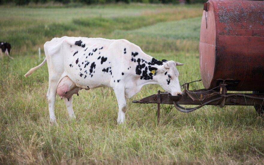 Gaisro paveiktose teritorijose – užterštas pienas