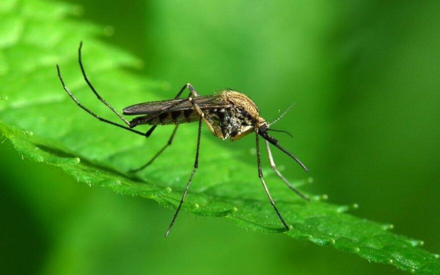 Mianmare stebimas didžiausias per septynerius metus Dengės karštinės protrūkis