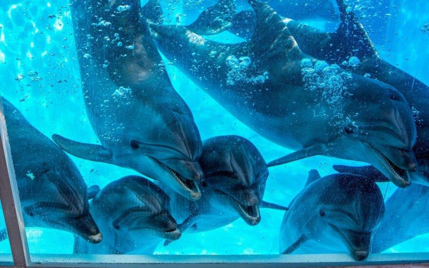 Delfinų pasirodymai