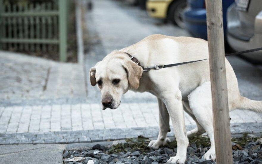 Šunų paženklintas minų laukas