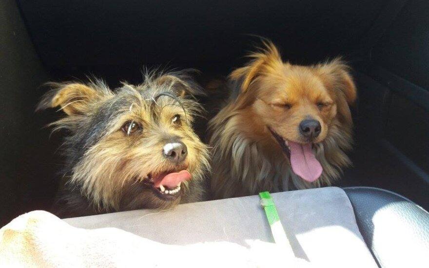 Luna ir Muna laukia būsimo šeimininko skambučio