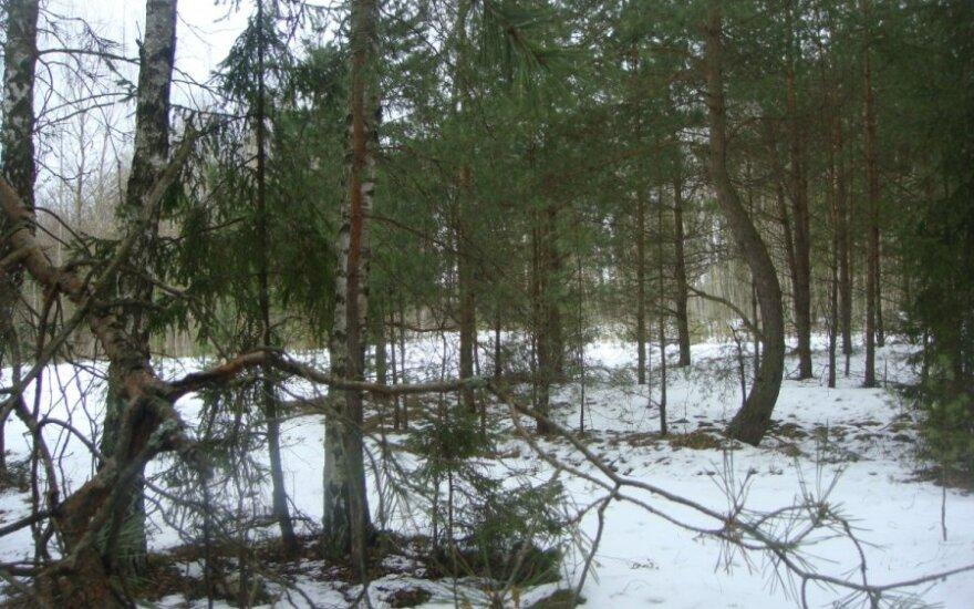 Kaune r., draustinio miške, rastas dingusia laikytos merginos kūnas