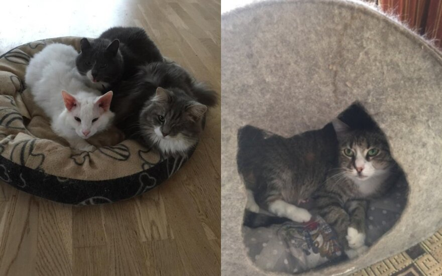 Skubus prašymas: katinėlių prieglaudai būtina parama