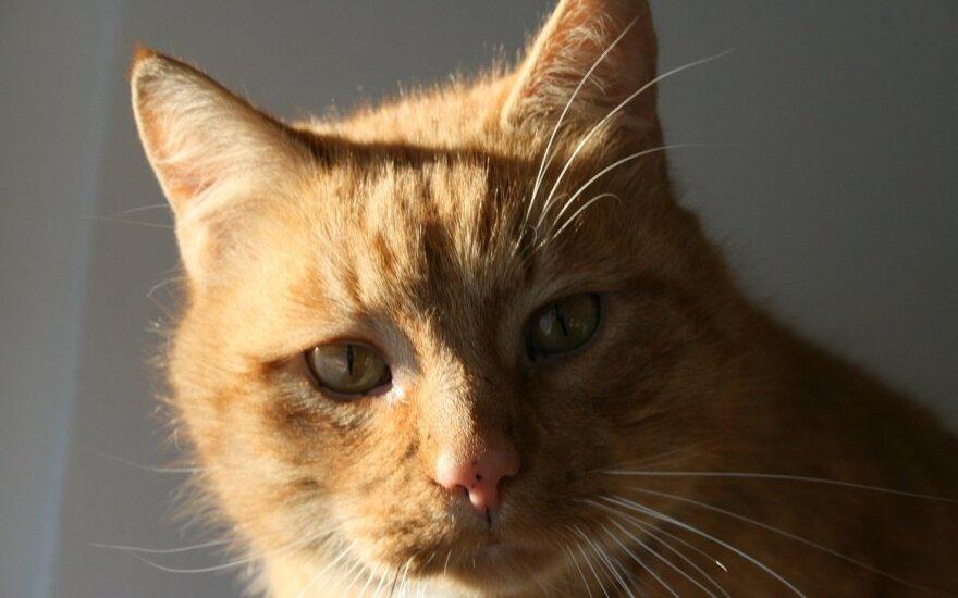 Katinėlis Strazdanėlė – šiltas saulės spinduliukas, kuriam reikia namų