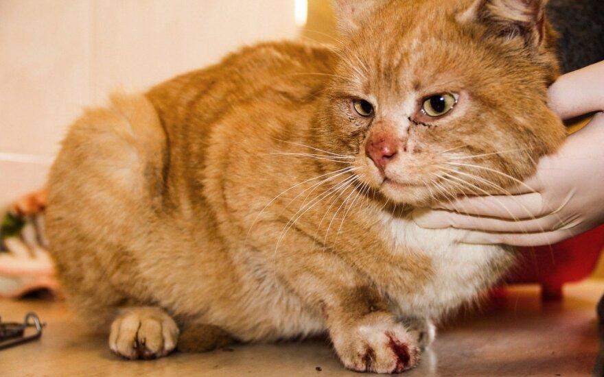 Į gyvūnų prieglaudą plūsta žiemos šalčio aukos: katinėlio Kuzios istorija