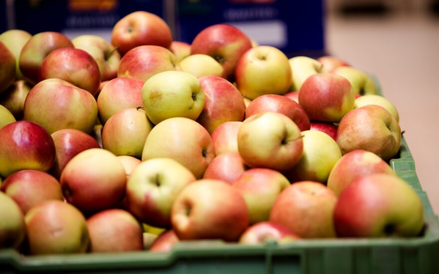Obuolių augintojai planuoja nedidelį derlių