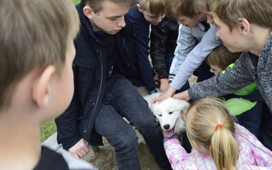 Švėkšnos gimnazistai padėjo beglobiams gyvūnams