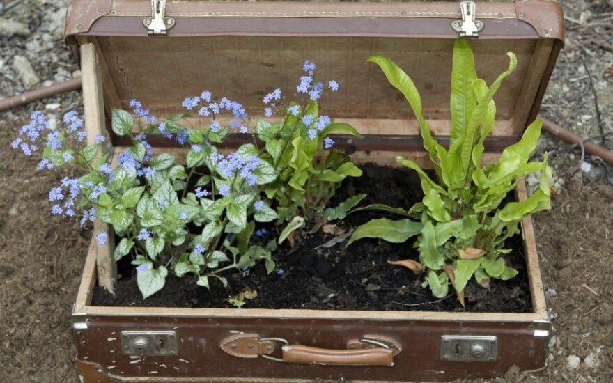 Ne visus augalus galima parsivežti iš užsienio