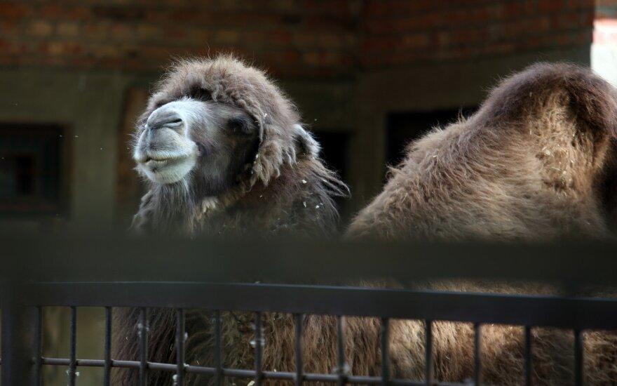 Aplinkos ministerija perima Zoologijos sodo rekonstrukcijos konkurso organizavimą