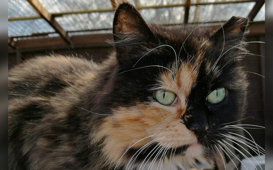 Katytė Somersetė liko be namų