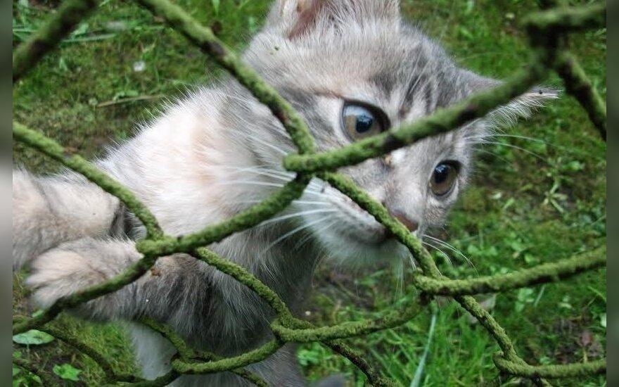 Kačiukai ieško namų