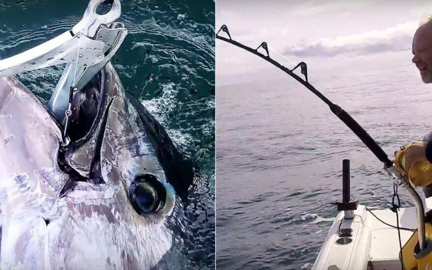 Po 50 metų Danijoje vėl sugautas tunas