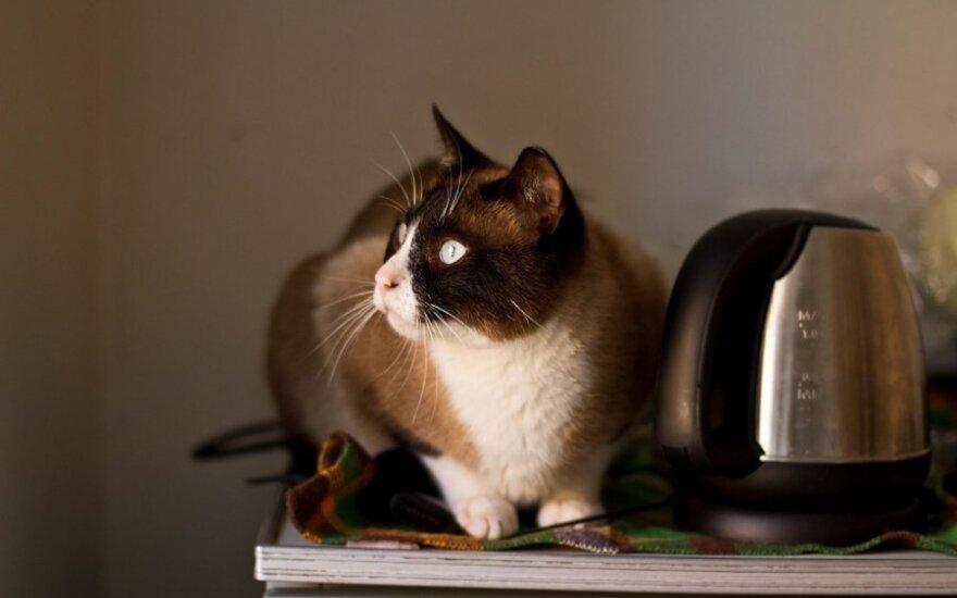 Sergantis beglobis katinas tapo namų džiaugsmu