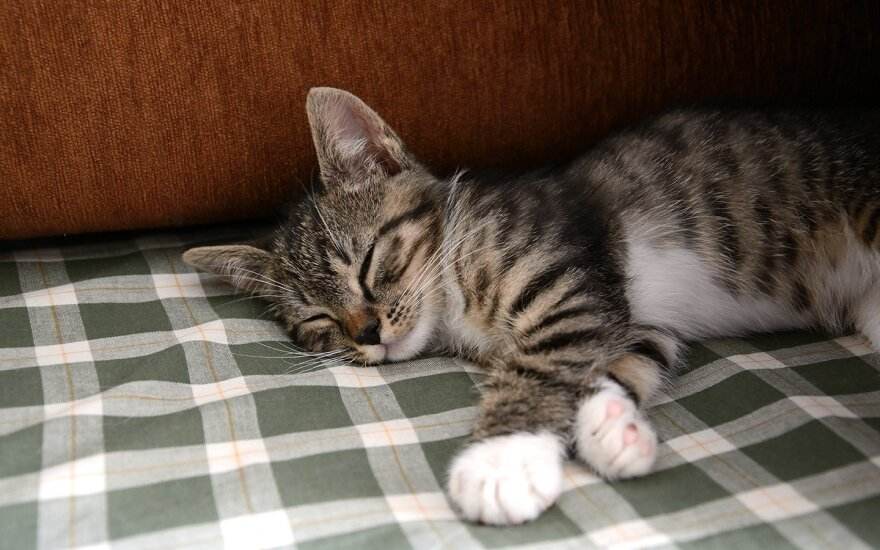 Mažas kačiukas ieško namų