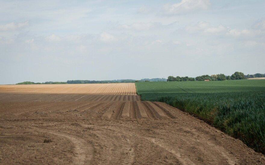 Suskaičiavo, kiek kartų mėginta supirkti daugiau kaip 500 hektarų žemės