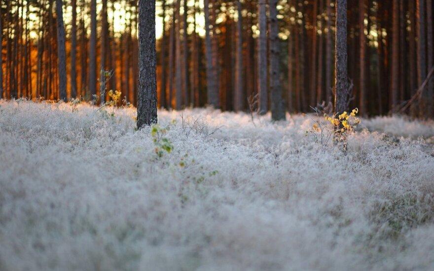 Nufotografavo tobulą rudens rytą Nemenčinėje