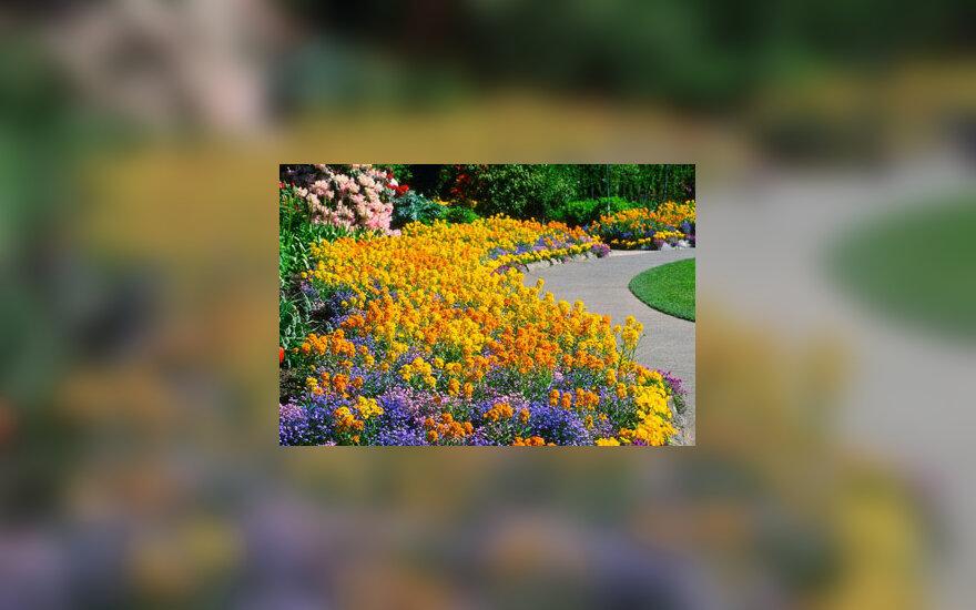 Gėlės, gėlynas, sodyba