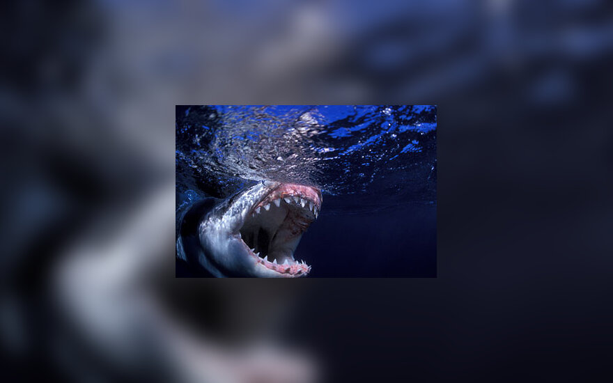 Plėšrūnai, ryklys