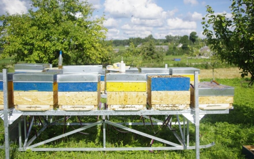 Lapkritis bityne – darbai dar nesibaigė