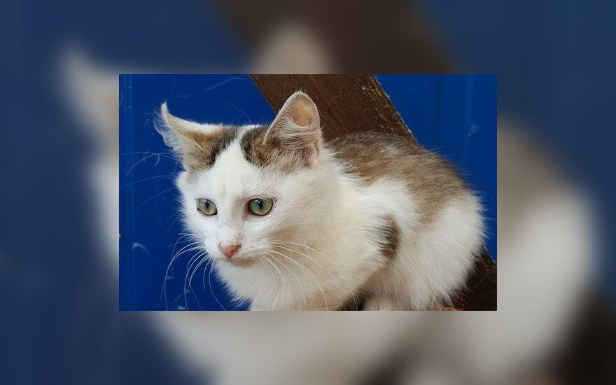 Katinėlis Oliveris ieško namų