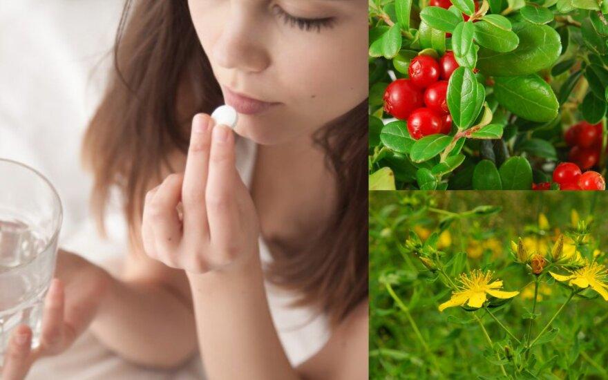 Specialistė išdėstė faktus apie homeopatiją: jeigu vartojate šiuos vaistinius preparatus, kai kurių vaistažolių reiktų vengti