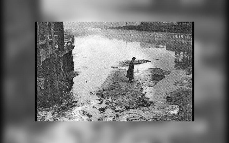 Vyras stovi ant upelyje supiltos mėsinių atliekų salos, 1911 metai Čikaga