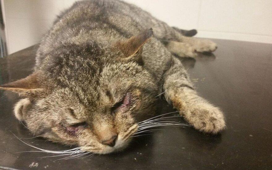 Vienas žingsnis iki akių praradimo: padėkime katinėliui Teodorui