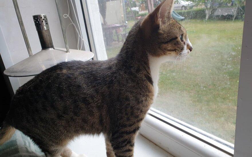 Mirga: grakšti, kaip garsioji dirigentė, tik ji – katytė