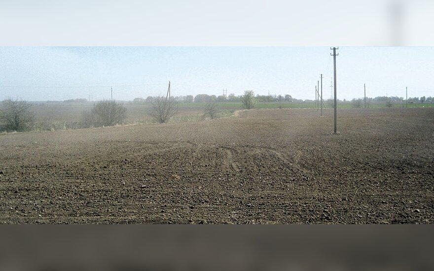 Latviai nesitiki gero derliaus