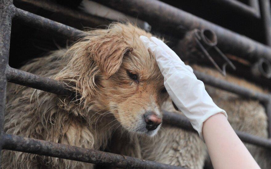 Šunys Kinijoje